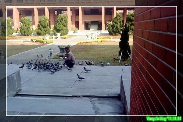 於中山大學廣場餵鴿子及小麻雀的伯伯