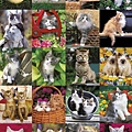 FJ01593 -Cuddly Cats.jpg