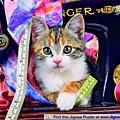 FJ01875 -Kitten and Cotton.jpg