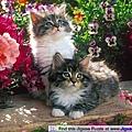 FJ10961 -Kittens in the Garden.jpg