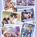 HY29210 -Cats.jpg