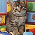 R14544 -Kitten in the Playroom.jpg