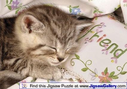 R16338 -Sleeping Kitten.jpg