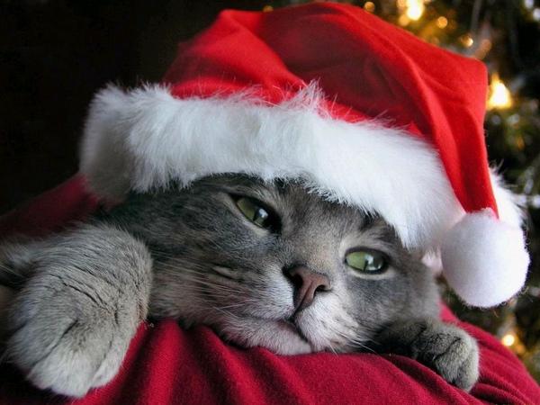 christmas-cat-wallpaper.jpg
