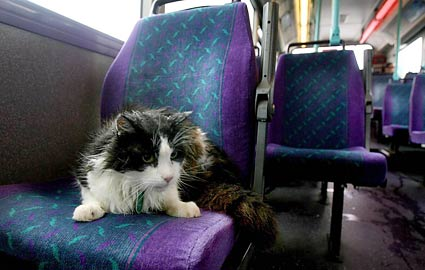 bus-cat-england-425ds073109.jpg