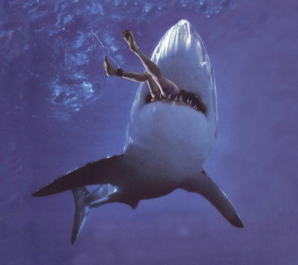 shark-attack1.jpg
