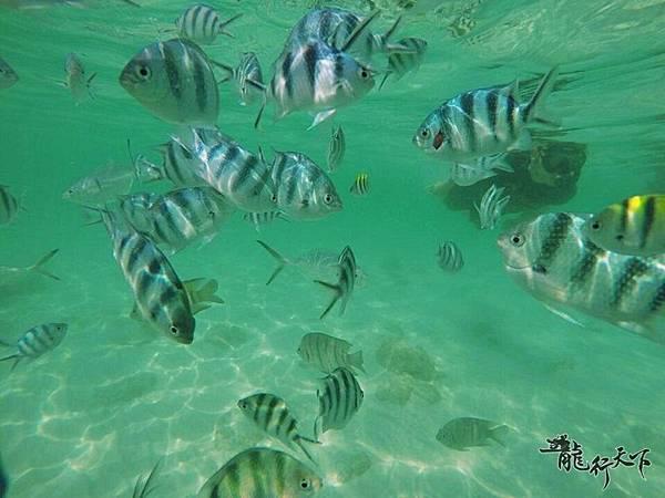 羅勇藍鯨島(金沙島)ㄧ日遊(2)_2461.jpg