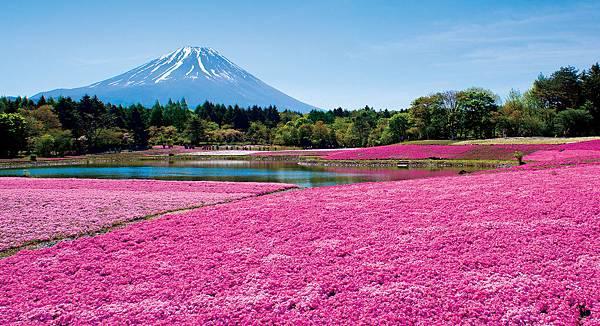 日本_富士芝櫻祭.jpg