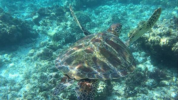 Pescado 海龜hopping_5866.jpg