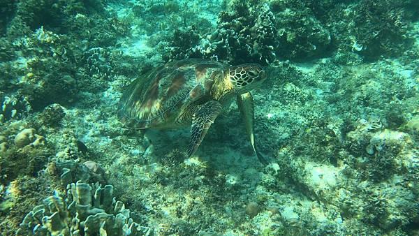 Pescado 海龜hopping_7230.jpg