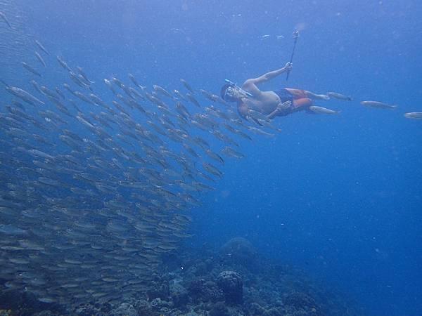 沙丁魚風暴Pescado hopping_9.jpg