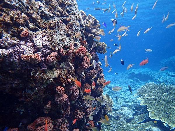 宿霧珊瑚礁大斷層 (6).jpg
