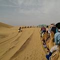 響沙灣騎駱駝 (2).jpg