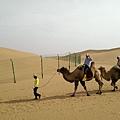 響沙灣騎駱駝 (1).jpg