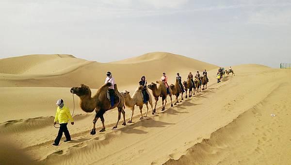 響沙灣騎駱駝 (3).jpg