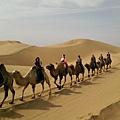響沙灣騎駱駝 (4).jpg