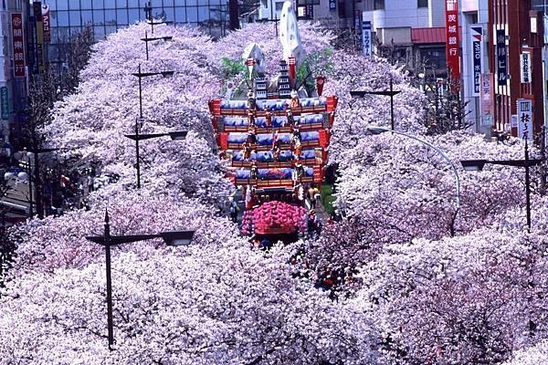 【Hitachi】early to mid Apr.  Sakura Festival.jpg