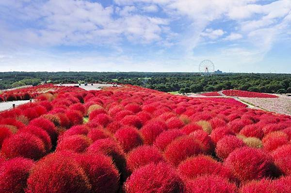 【Hitachinaka】early to mid Oct. Hitachi Seaside Park 1.jpg