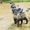 湄登大象學校-騎大象 (4).JPG