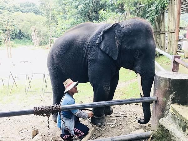 湄登大象學校-大象表演 (2).JPG