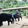 湄登大象學校-大象表演 (6).JPG