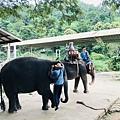 湄登大象學校-大象表演 (5).JPG