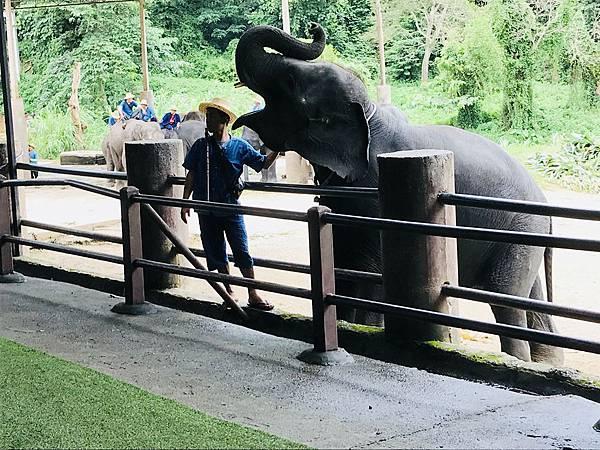 湄登大象學校-大象表演 (8).JPG