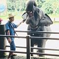 湄登大象學校-大象表演 (9).JPG