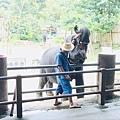 湄登大象學校-大象表演 (12).JPG