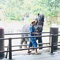 湄登大象學校-大象表演 (13).JPG