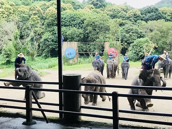 湄登大象學校-大象表演 (14).JPG