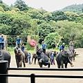 湄登大象學校-大象表演 (16).JPG