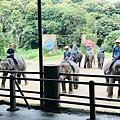 湄登大象學校-大象表演 (15).JPG