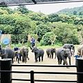 湄登大象學校-大象表演 (17).JPG