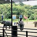 湄登大象學校-大象表演 (18).JPG