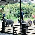 湄登大象學校-大象表演 (19).JPG