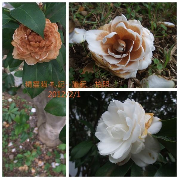 2012_0201_山茶花.jpg