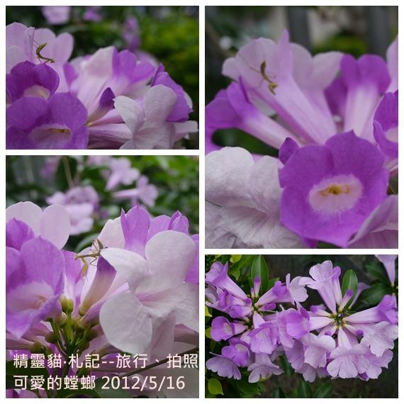 2012_0516_螳螂