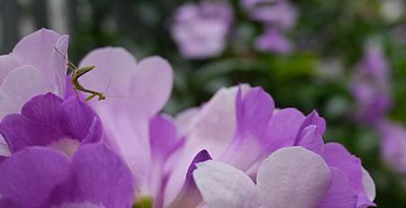 2012_0516_Banner_P1030195