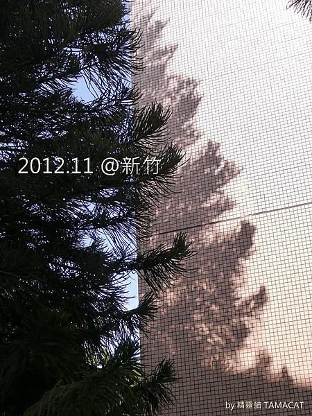 2012.11 新竹市的大棵聖誕樹