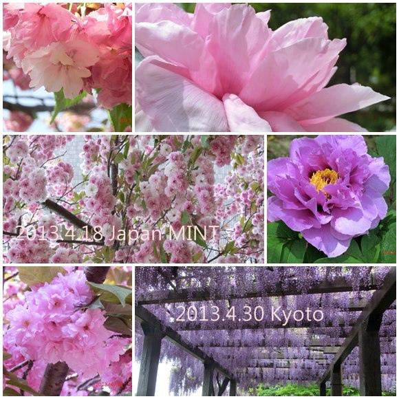 2013/4/18的大阪造幣局櫻花們 及 4/30京都鳥羽水環境保全センター紫藤(長輩拍,我還沒去過)