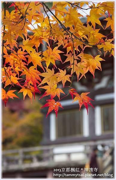 2013神謢寺IMG_1508.jpg