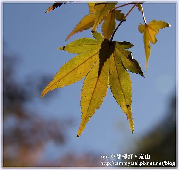 2013嵐山IMG_1380.jpg