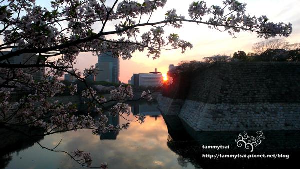 櫻花與夕陽.JPG