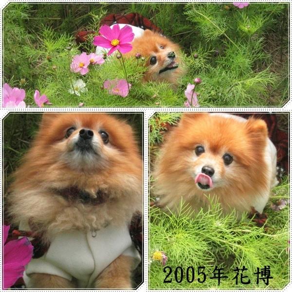 2004花系列16.jpg