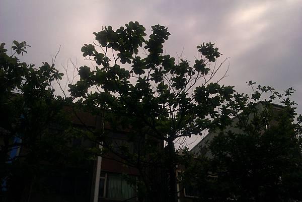 IMAG0666