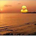 黃色小鴉 淡水夕陽