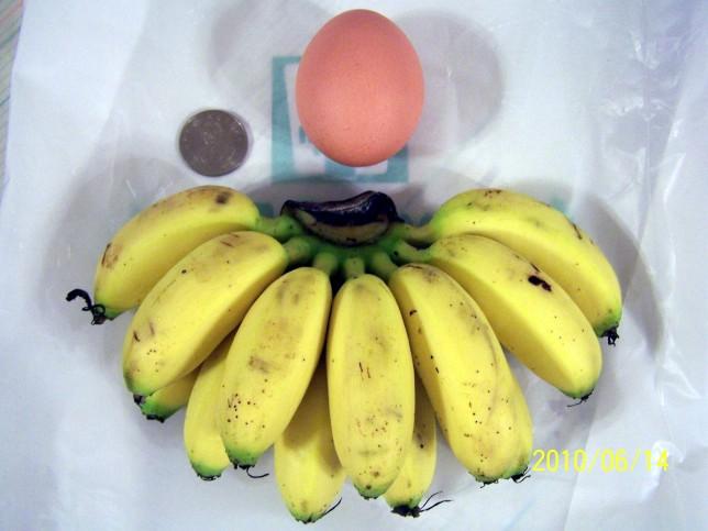 蛋蕉vs雞蛋10元644 100_5952.jpg