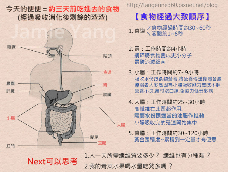 消化系統s
