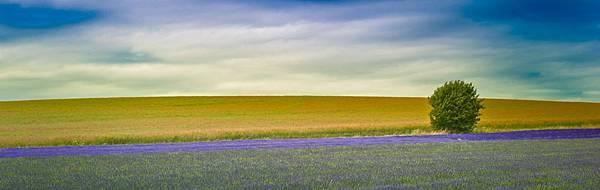 hitchin_lavender_2560x1024.jpg